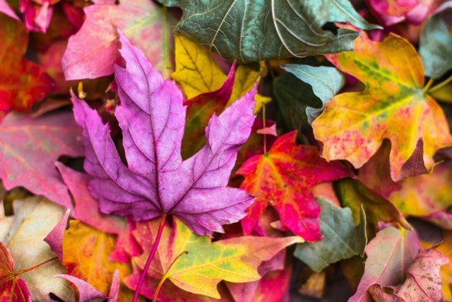 7 plants for a colourful autumn garden