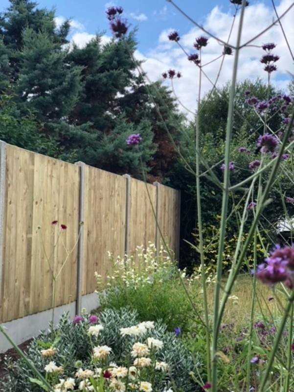 Feather Edge Fence Panel (Standard)